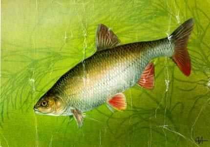 какая рыба клюет в начале ноября